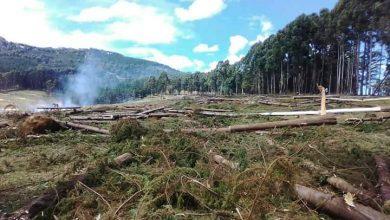 Deforestation at Kapwata forest